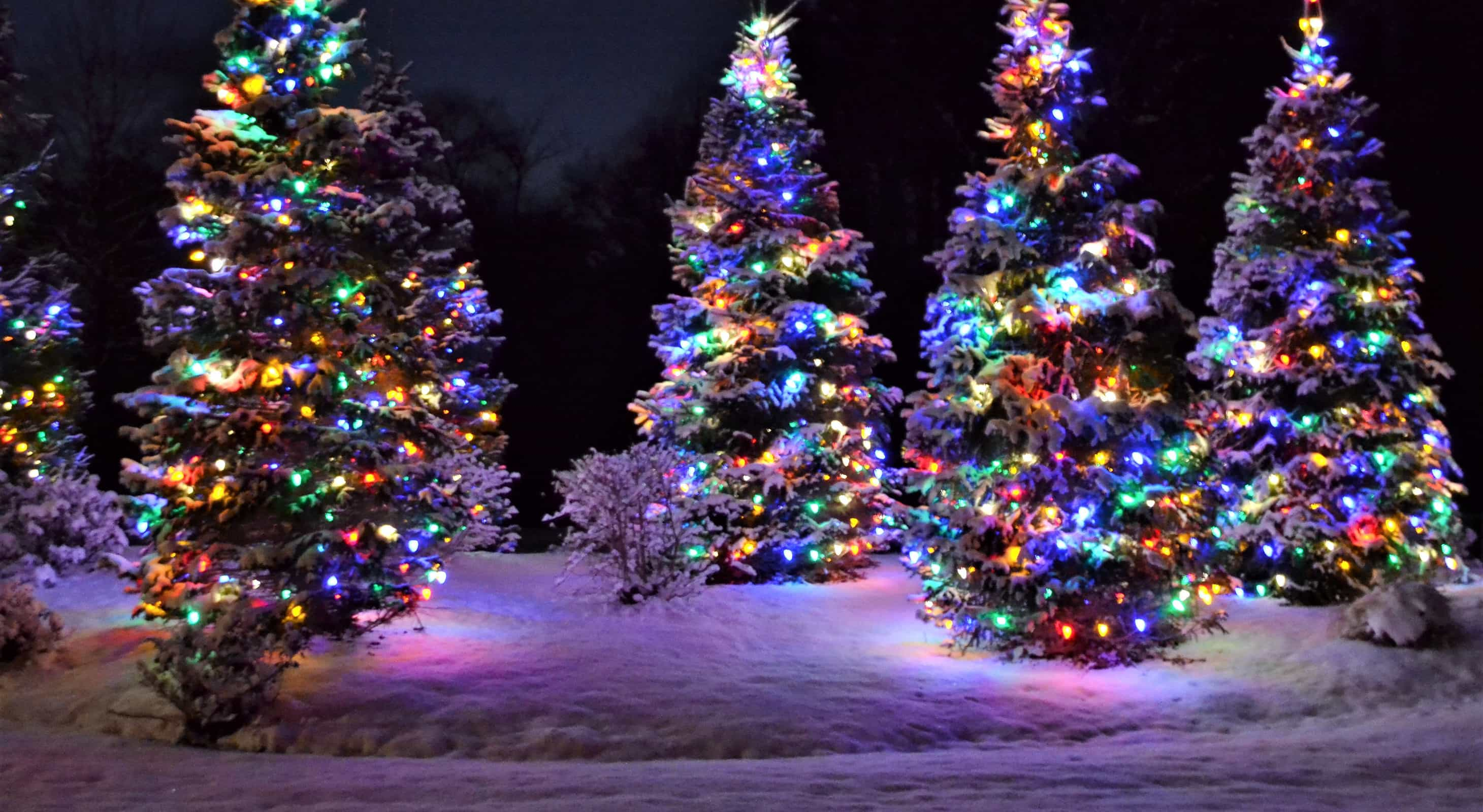 Christmas lights on trees in the snow