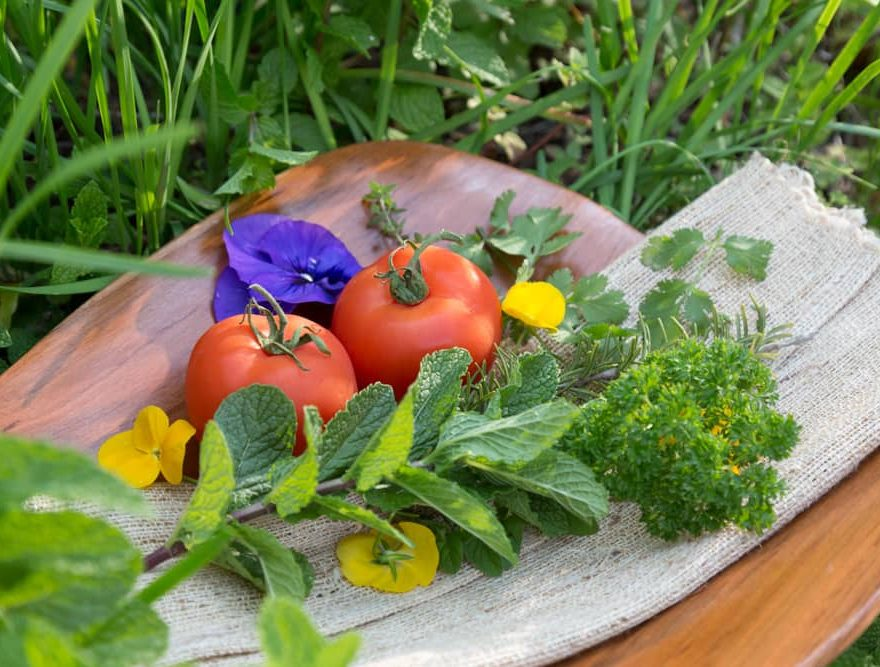 Vegetables from the Garden at our Historic Inn in Manteo