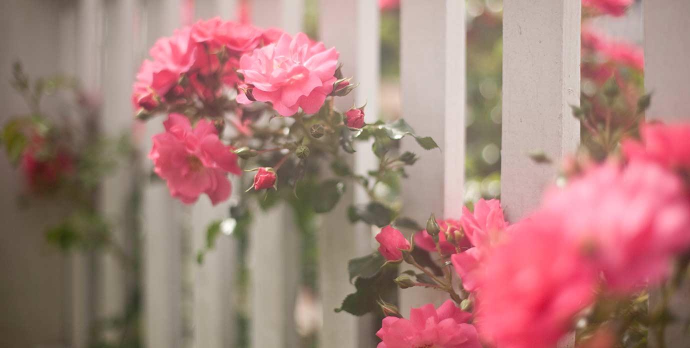 Pink Flowers Outside Our Roanoke Island Inn