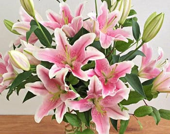 A beautiful arrangement of pink and white lilies with bright green stems