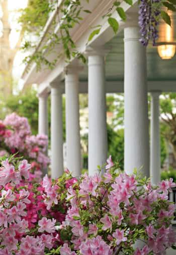 A view of the white pillars of the porch, with bright pink flowers in the foreground
