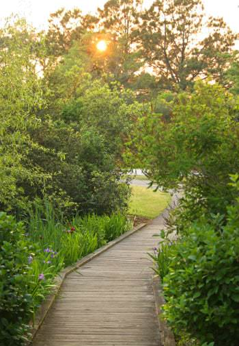 A small pathway curves through a beautiful bright green garden, the sun peaks through the leaves in thebackground