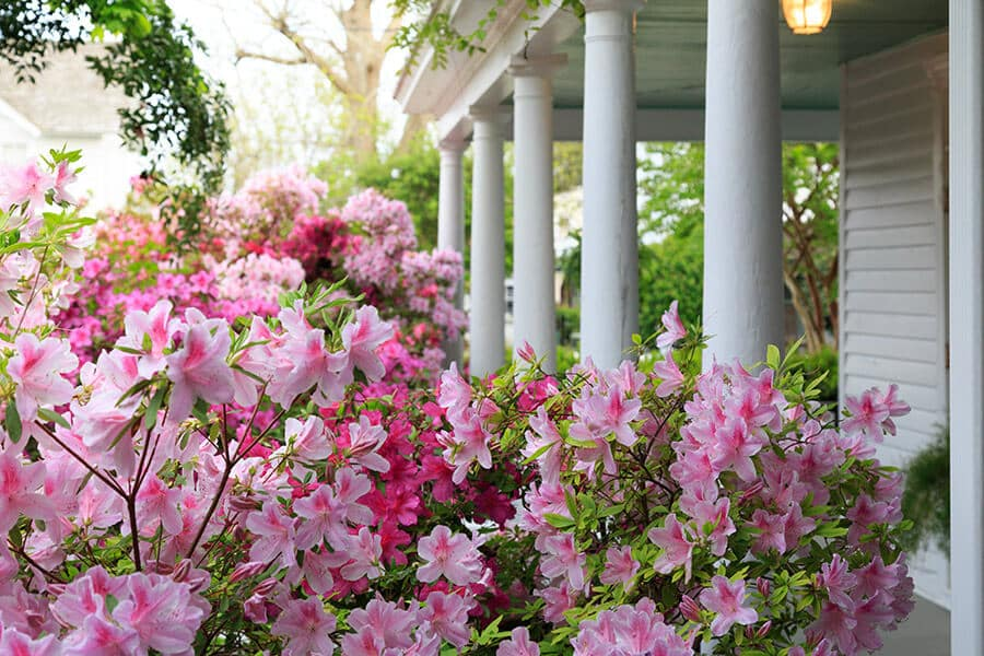 Beautiful Gardens at Our Inn on the Outer Banks